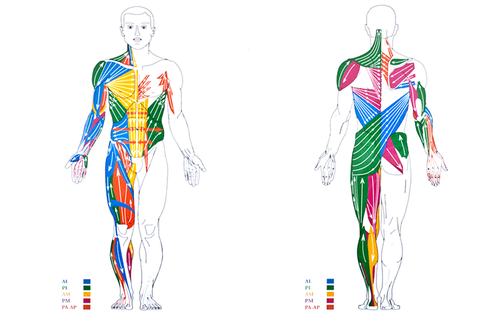 Pérez y Salcedo Anatomía